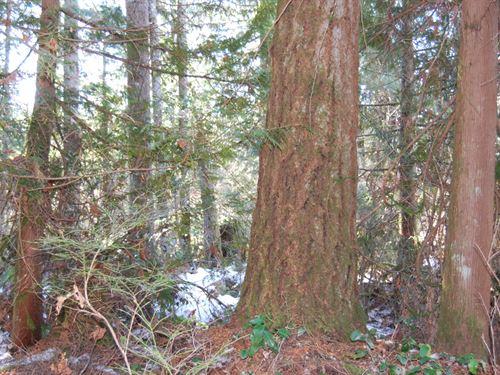 Old Pipeline Road : Monroe : Snohomish County : Washington