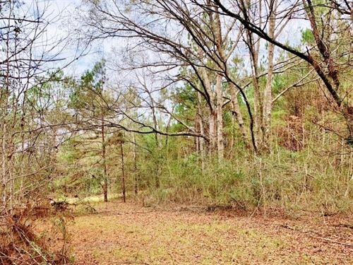 116.91 Acres Hunting/Timber Land Fo : Magnolia : Pike County : Mississippi
