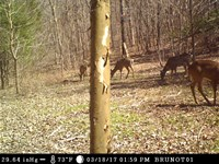 51 Acres Extremely Good Deer : Des Arc : Madison County : Missouri