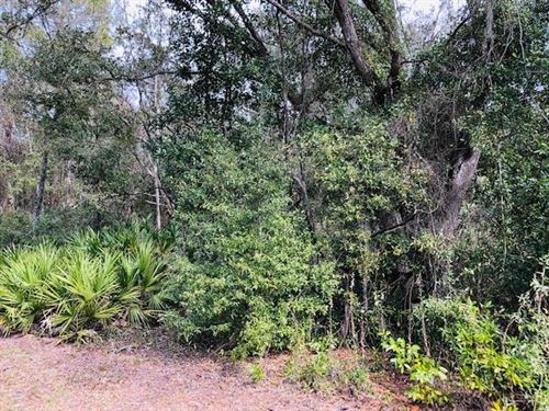 3.36 Acres 777325 : Chiefland : Levy County : Florida