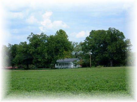 Timber & Row Crop Farm : Sandersville : Washington County : Georgia