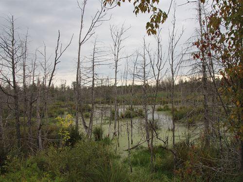 Hunting Land Northern Michigan Duck : Presque Isle : Michigan