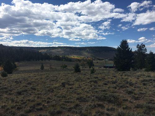 Trailridge Trail : Gunnison : Colorado