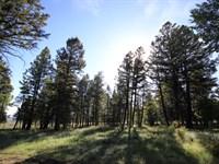 514 Monarch Drive : Gunnison : Gunnison County : Colorado