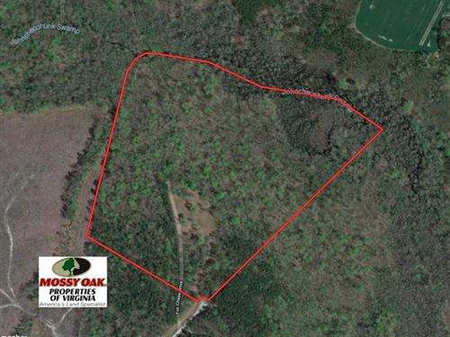 55 Acres of Hunting And Timber Lan : Dendron : Surry County : Virginia