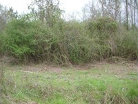 Vacant Residential Lot in The Eufa : Eufaula : Barbour County : Alabama