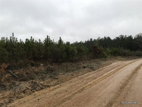 40 Ac, Young Pine Timberland : Columbia : Caldwell Parish : Louisiana