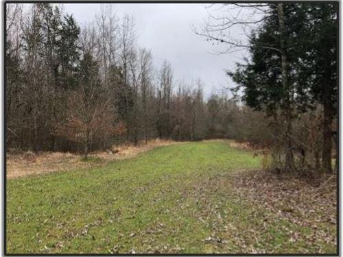 65.4 Acres With A Cabin In Yalobush : Tillatoba : Yalobusha County : Mississippi