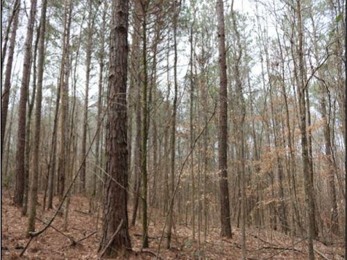 10.2 Acres In Neshoba County In Phi : Philadelphia : Neshoba County : Mississippi