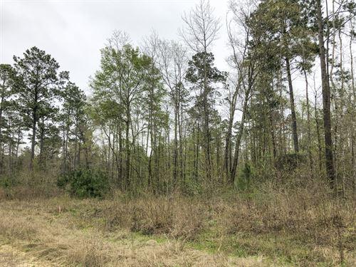 20 Acres Felix Currie Rd : Point Blank : San Jacinto County : Texas