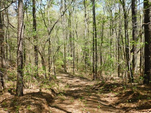 4.9 Acre Lot With Creek : Ranburne : Cleburne County : Alabama