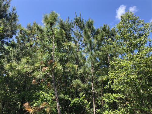 Big Branch : Laurinburg : Scotland County : North Carolina