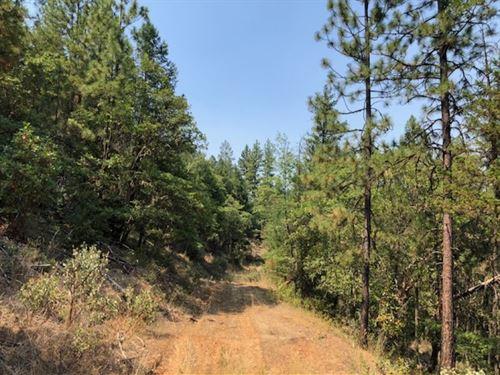 Cougar Creek : Ruch : Jackson County : Oregon
