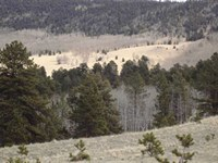 Massive Buck Wilderness : Guffey : Park County : Colorado