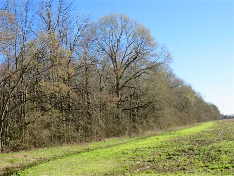 82 Acres of Hardwood Timber : Epps : West Carroll Parish : Louisiana