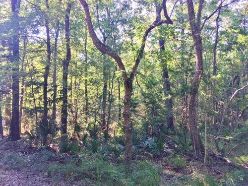 47 Acres Development, Recreational : Springfield : Livingston Parish : Louisiana