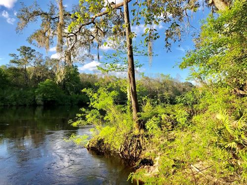 Suwannee River Waterfront Property : Mayo : Lafayette County : Florida