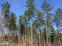 Westminster Hunting And Timber Prop : Westminster : Oconee County : South Carolina