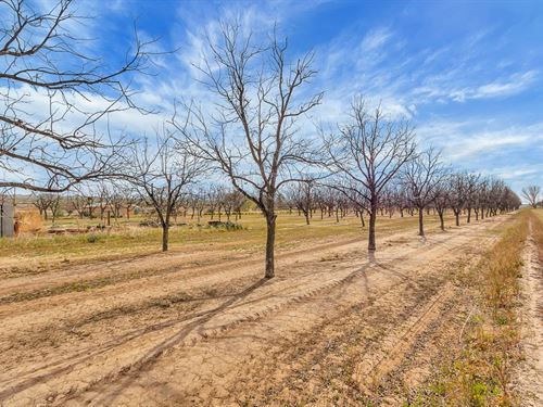 Pecan Farm Rio Grande Valley : Las Cruces : Dona Ana County : New Mexico