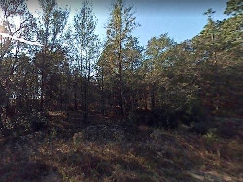 Marion County, Fl $8,000 : Ocala : Marion County : Florida