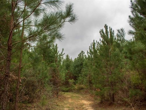 74 Acres In Greene County In Richto : Richton : Greene County : Mississippi
