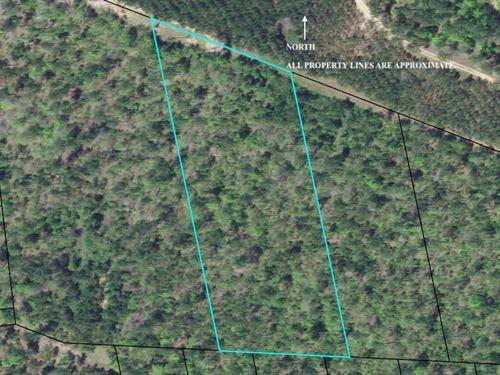 3 Wooded Acres : Crawfordville : Taliaferro County : Georgia