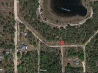 Trout Lake Shores, Putnam County : Interlachen : Putnam County : Florida