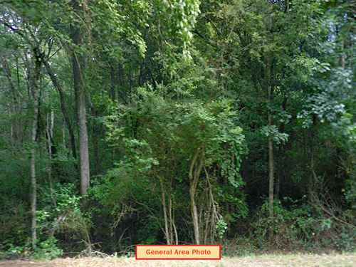 Large Lot Near 30 Min From Atlanta : Newnan : Coweta County : Georgia
