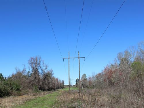 Potential Solar Site : Hawkinsville : Pulaski County : Georgia
