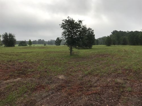 Beautiful Rolling Pasture : Live Oak : Suwannee County : Florida