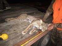 Hunters Paradise, Black, Bear, Dee : Pangburn : White County : Arkansas