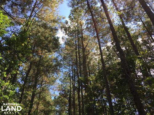 Williston Hunting, Timber & Farmlan : Williston : Barnwell County : South Carolina
