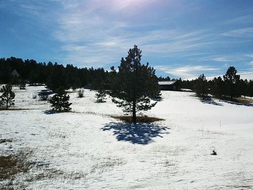 Lot in Central Colorado Mountains : Florissant : Teller County : Colorado