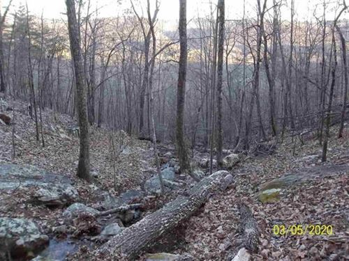 East Tennessee Hunting Property : Rogersville : Hawkins County : Tennessee