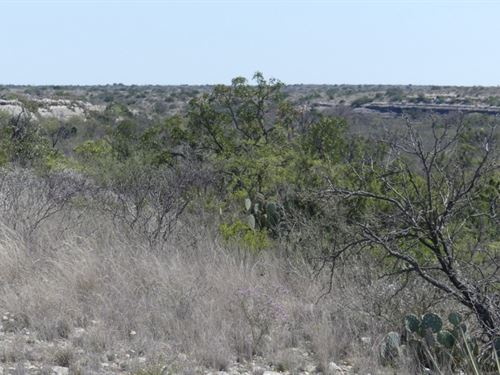 183 Acre Hunting Ranch : Dryden : Terrell County : Texas
