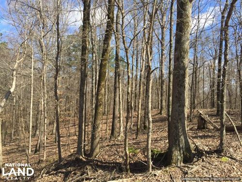 McCarley Investment Property : McCarley : Carroll County : Mississippi