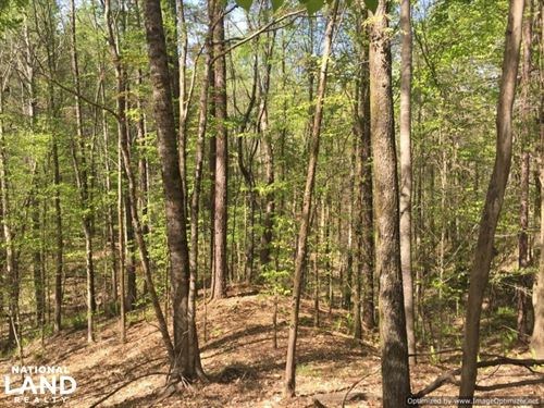 A True Timber Tract : Carrollton : Carroll County : Mississippi