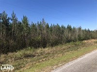 Future Income Producing Pine Timber : Morton : Scott County : Mississippi