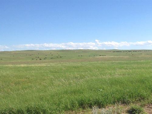 McCasland's Figure 2 Ranch : Arthur : Nebraska
