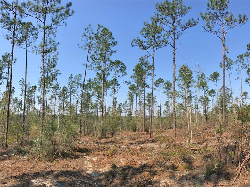 Myrick And Suedeshoe Tract : Century : Escambia County : Florida