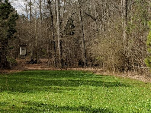Napolean Pines 6+/- Acres : Woodland : Randolph County : Alabama