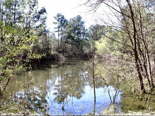 43 Acres With Pasture And Pine Plan : Jayess : Lawrence County : Mississippi