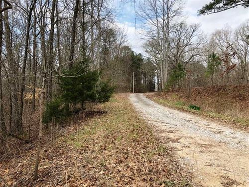 39.50 Acres, 10-12 Year-Old Pine : Hackleburg : Marion County : Alabama