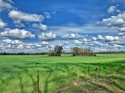 250 Acres Vacant Pasture : Newberry : Alachua County : Florida