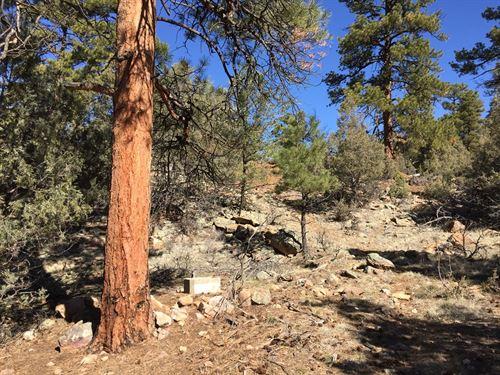 Cabin Site El Vado Lake Northern NM : El Vado : Rio Arriba County : New Mexico
