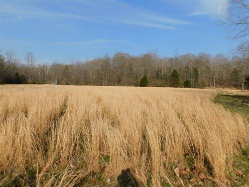 Land TN Creek, Timber, Hunting : Savannah : Hardin County : Tennessee