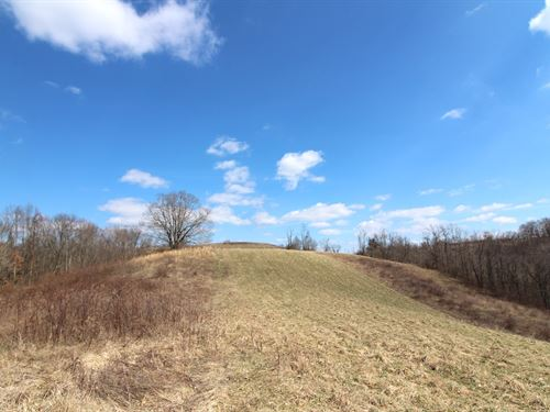 Pugh Ridge Rd, 43 Acres : Alledonia : Belmont County : Ohio