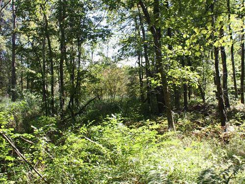 40 Rolling Wooded Acres in Allegan : Pullman : Allegan County : Michigan