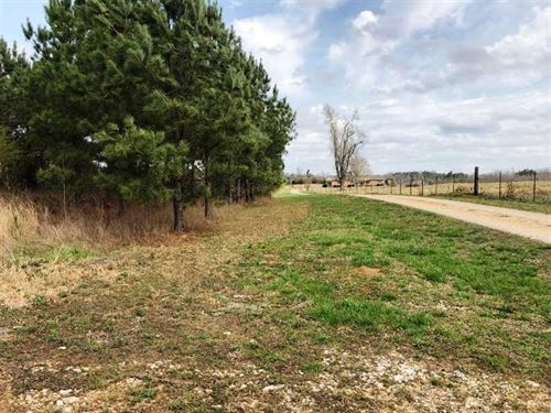 207 Acres, 10-12 Year-Old Pine NE : Hackleburg : Marion County : Alabama