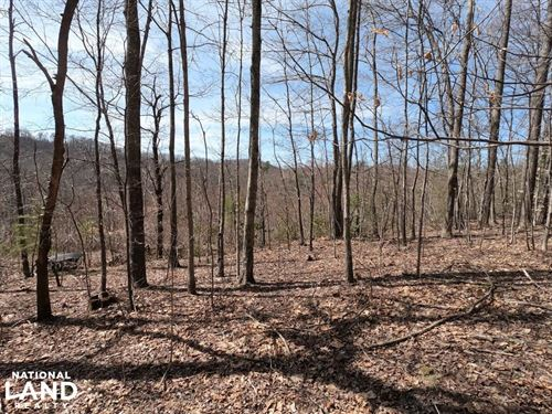 Unrestricted Woodland Acreage Near : Hendersonville : Henderson County : North Carolina